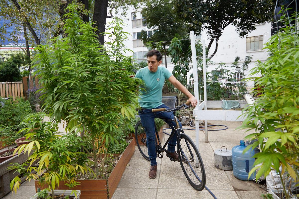 Activistas ciclistas buscan legalización de la marihuana